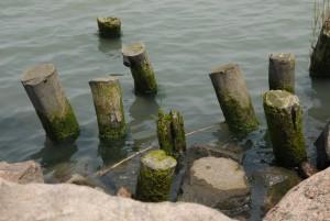 东方绿舟 淀山湖